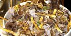 Types of edible mushrooms