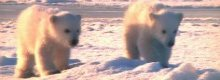 Frozen Planet fakery row continues