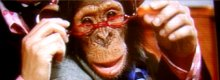 Monkey business: The Chimpan News Channel