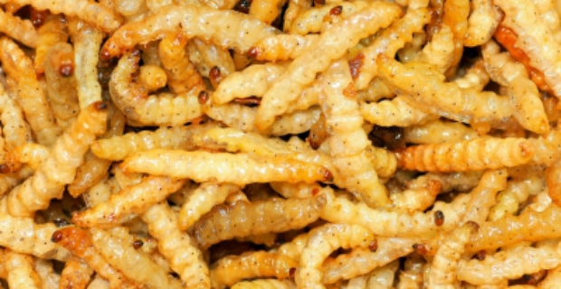 Edible Insects: The Benefits of Eating Bugs