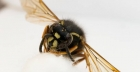 What to do about wasp sting