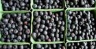 Eating blueberries could reduce the risk of type 2 diabetes