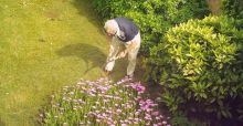 Gardening and DIY projects linked to lower heart and stroke risks