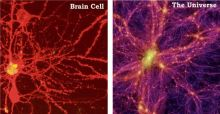 Is the Universe a giant brain and is there a fundamental organising principle in nature
