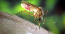 Tips for home mosquito control