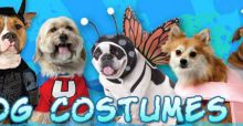 DIY dog costumes for Halloween