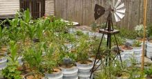 Small garden ideas for beginners | Photo Gallery