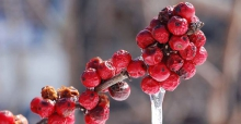 The Best Outdoor Plants for Winter