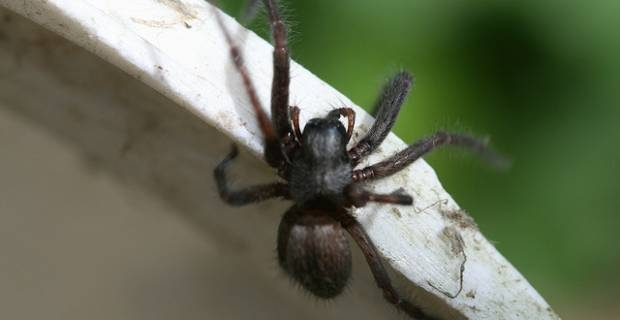 Get rid of house spiders on line on excite uk for How to get rid of spiders in the house uk