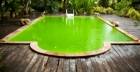 How to clean green water in swimming pool