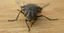 The Top Tips on How to Get Rid of Flies