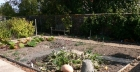 How to get rid of worms in the garden