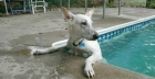 Choose the right paddling pool for your dog
