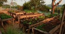Benefits of raised vegetable beds on legs