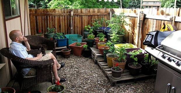 Small Gardens And Low Maintenance Plants