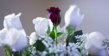 Floral Valentine: Valentine's Day flowers meaning