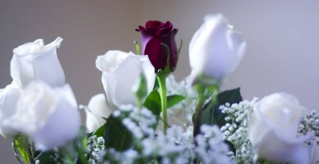 valentine's day flowers meaning: the best on excite uk home, Ideas