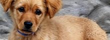What to consider when choosing a pet insurance policy