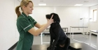 Career guide & advice: pursuing a career as a veterinary nurse