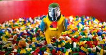 Charlie the parrot hired as ambassador for Legoland's new pirate camp