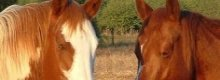 Horse insurance from NFU Mutual