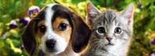 Pet insurance is insurance cover for your four legged friends