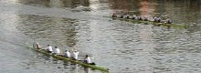 Swimmer disrupts boat race