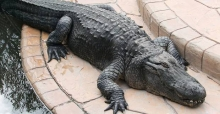 Enjoy the wildlife on your Florida holidays in 2014