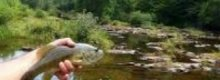 Enjoy a spot fishing on holidays in Yorkshire